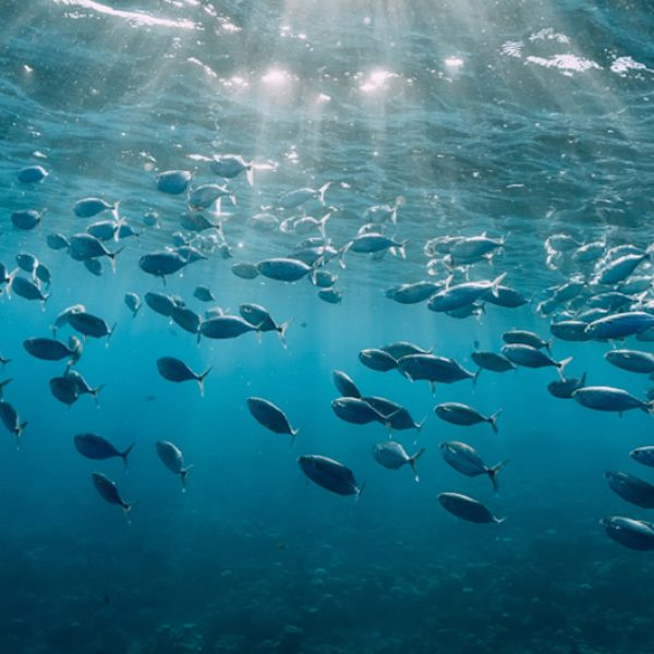 Protecting You, and Our Oceans